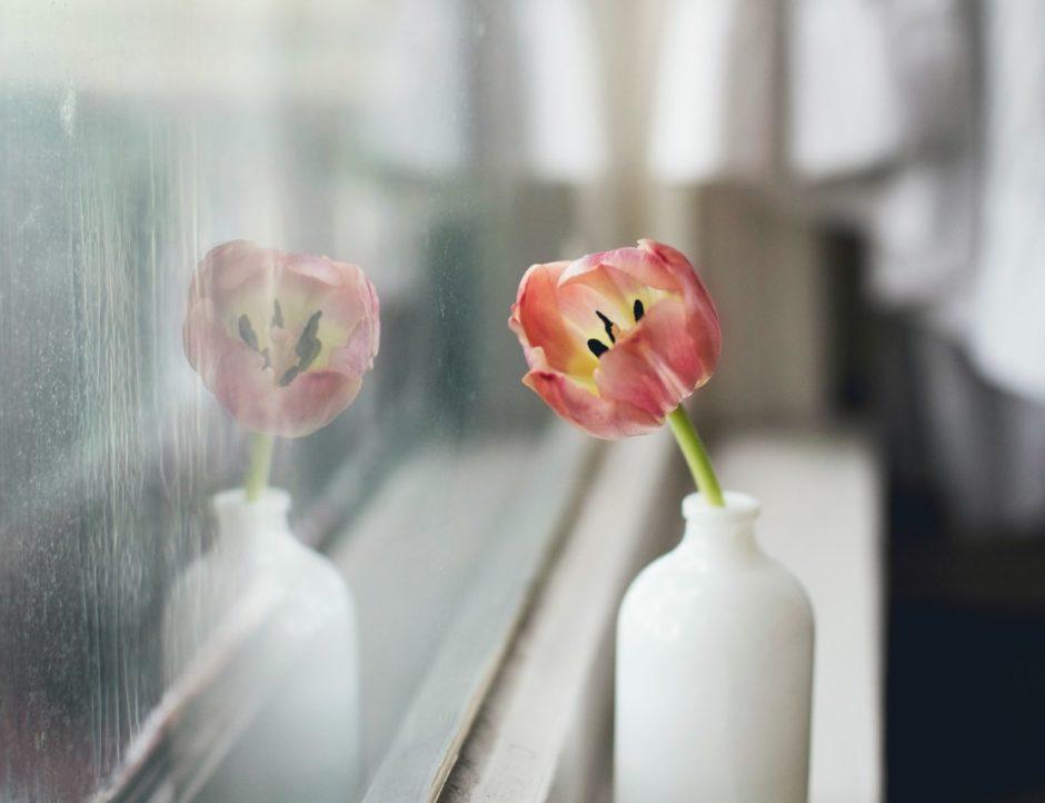 花瓶に生けられたチューリップ。窓ガラスに写ってアンニュイな雰囲気。