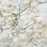 白い細かい花